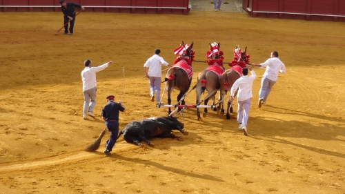 """Le """"Matador a triomphé et le toro est glissé hors de l'arène par 4 chevaux"""