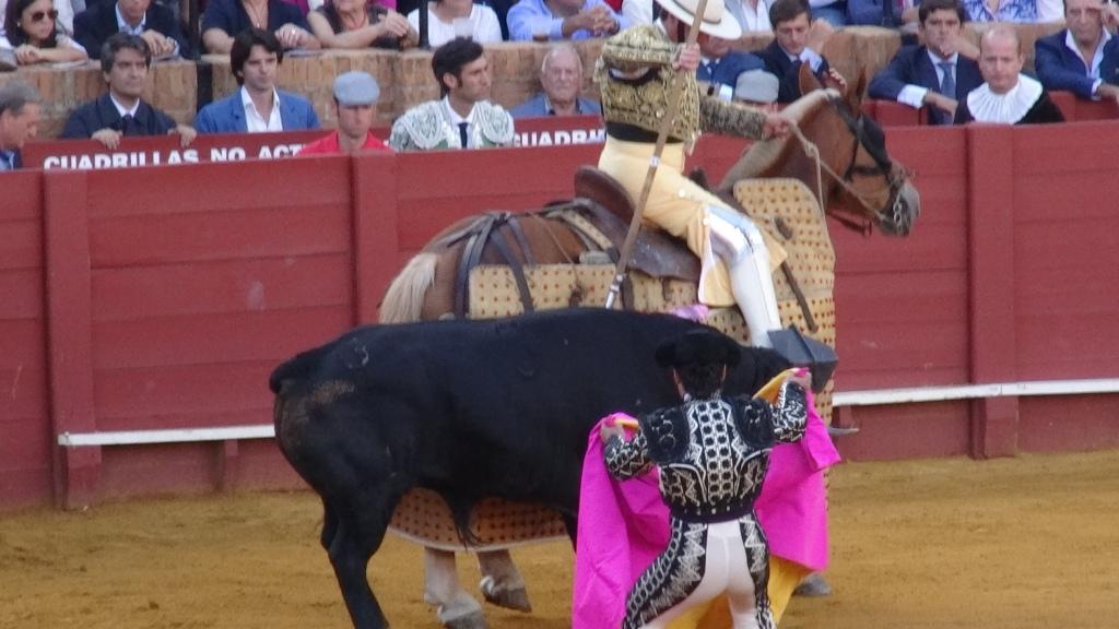 """Le """"Picador"""" exécute le premier tercio, et transperce l'animal d'une lance"""