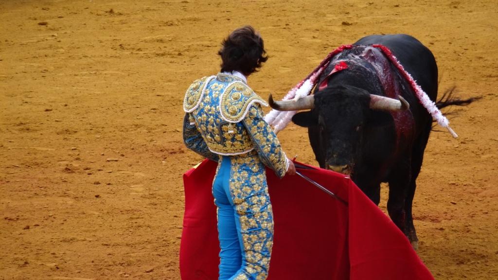 """Le """"Matador"""" et le toro analyse leur possibilités ... le toro n'ayant aucune chance"""