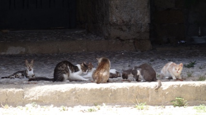 Les chats fossoyeurs !