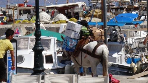 Mulets bien chargé / Well Loaded Mule