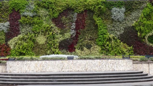 Mur végétal / Plant Wall