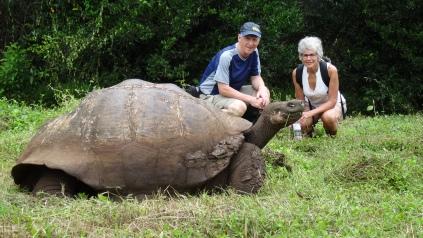 Tortue de 1,5m. Tortoise
