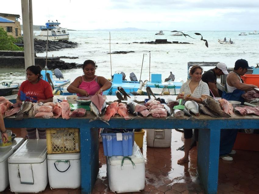 L'arrivage de la pêche / Sea Fishing Catch
