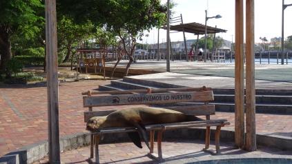 Sieste sur les bancs publiques / Nap on a Public Bench