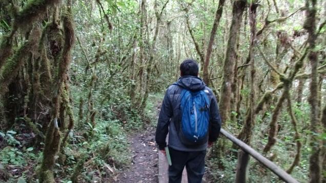 Forêt de lierres / Ivy Forest