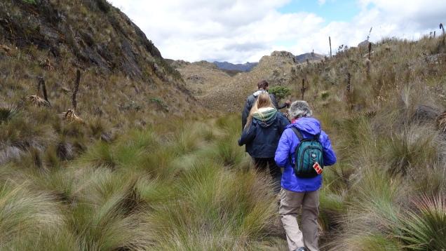 Les fourrées andines / Andean Bushes
