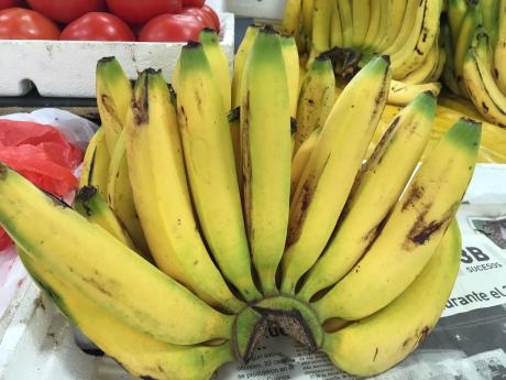 Grappe de bananes / Bunch of Bananas