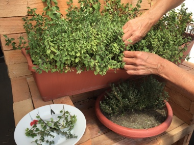 Pour le repas, on cueille nos herbes fines parfumée sur la terrasse / For food preparation, we pick the fines herbs right from our patio