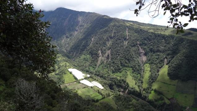 Vallée cultivée / Farming Valley
